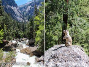Yosemite-bridalveil(c)Megumi Mitani