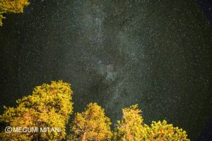 Yosemite-stars(c)Megumi Mitani