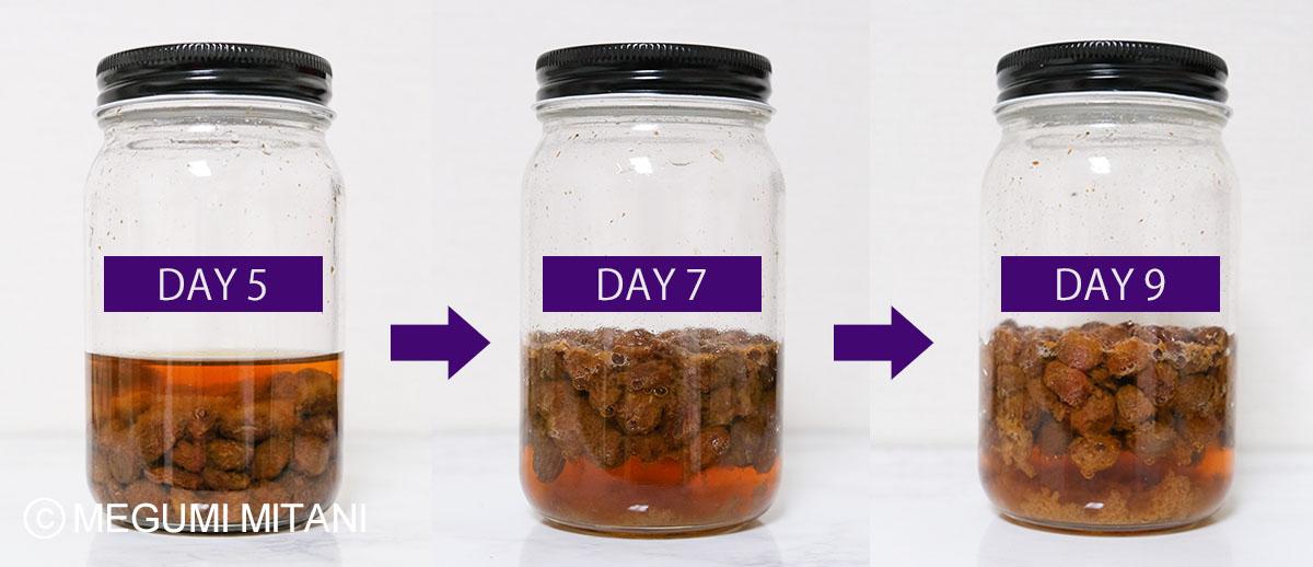 自家製レーズン酵母5日目-9日目